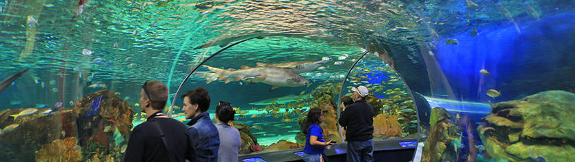 Toronton uudessa akvaariossa