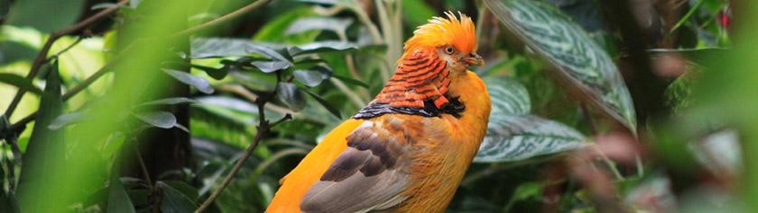 Värikkäitä lintuja kuvaamassa